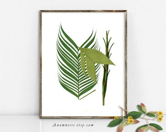 PALM TREE FRONDS 2 - digital download - printable antique plant illustration retooled by Anamnesis - image transfer - totes, pillows