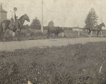 Game Over - Antique 1910s Men, Horses and Bull Real Photo Postcard