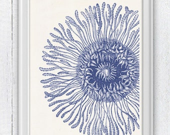 Jellyfish detail  in blue - coastal decoration  print- Home decor poster-  Haeckel illustration A4 print SPOJ019