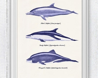 Wall decor poster Whales and dolphins n3-  sea life print- Nursery wall art dolphins print SAS064