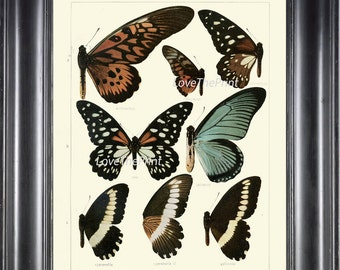 BUTTERFLY PRINT SEITZ  Botanical Art Print 31 Beautiful Blue Spotted Butterflies Natural Science Antique Illustration Home Wall Decor