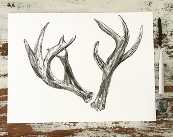 9x12 Original Drawing Deer Antles-Detailed Ink and Charcoal Drawing