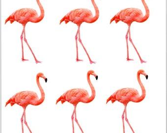 D2832 Pink Flamingos