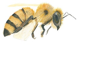 Watercolor Painting Honey Bee Insect Archival Print 5x7