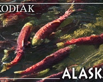 Kodiak, Alaska - Salmon (Art Prints available in multiple sizes)