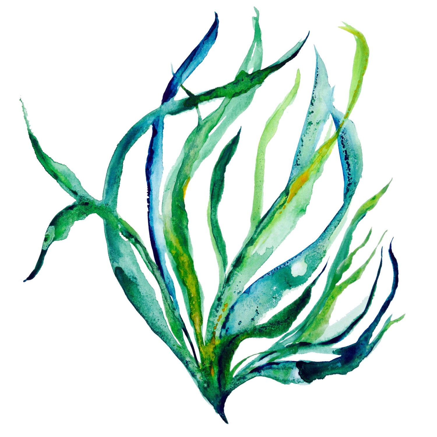 Seaweed Underwater Drawing Popular Items For Illustration On