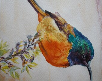 Bird Hummingbird with Watercolor, original painting/Bird Watercolor (Hummingbird)