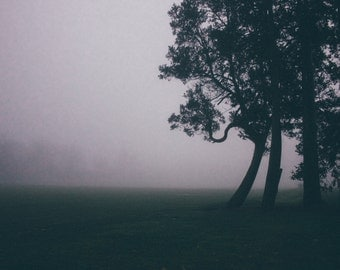 Foggy Afternoon {photo print}