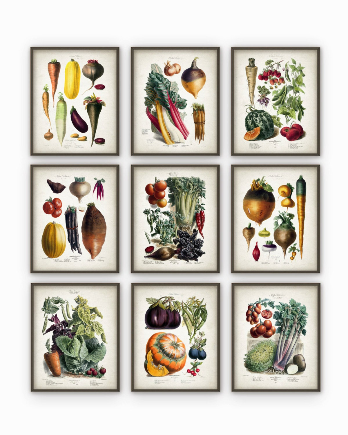 Kitchen Art Vegetables Print Botanicals Kitchen Art: Vegetables Kitchen Wall Art Print Set Of 9 Antique Botanical