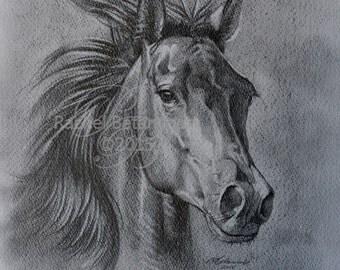 Elegant Arabian