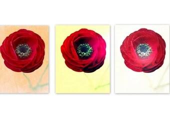 Home Decor Print Set of 3 Red Ranunculus, bedroom decor, bathroom decor, flower photography