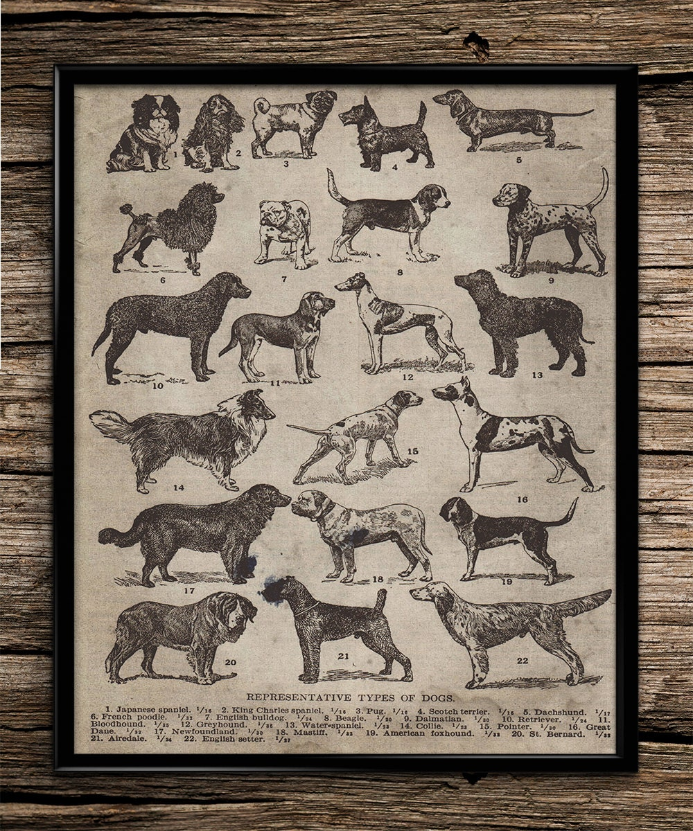 Poster Weights Etsy: Vintage Breeds Of Dogs Animal Poster Dog By UniquelyGiftedArt