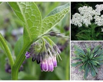 All-Purpose Salve | Organic | Comfrey | Yarrow | Plantain