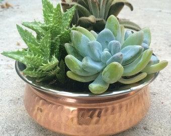 Elegant copper decor with unique succulents, succulent gift, office gifts