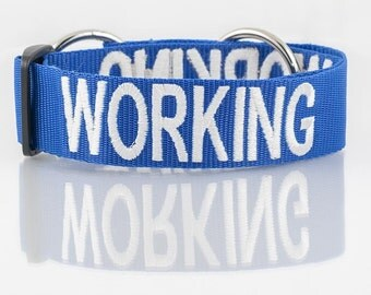 Color Coded Blue Working Semi Choke L-XL Dog Collar (Do Not Disturb) Personalised message Prevents Accidents By Warning Others In Advance