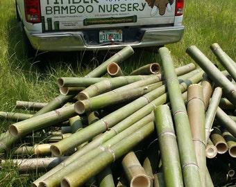 Timber Bamboo Poles