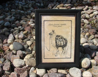Pen and Ink Llama Print 5x7 Vintage -Like Science Diagram Picture