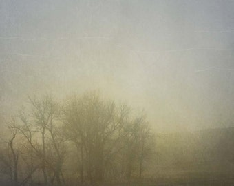 Fog and Trees in Morning, Fine Art Print