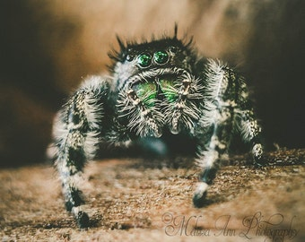 Digital Download Photography, Instant Download, Fine Art Photography, Macro Photography, Nature Photography, Printable Art, Jumping Spider