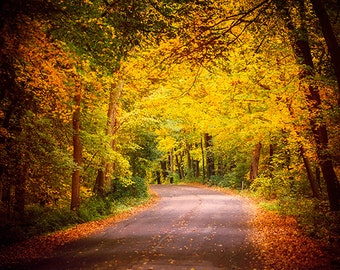 Autumn in Wisconsin, Landscape Photography, Fall Foliage, Wisconsin Decor, Woods, Forest, Road, Gold, Green, Nature Photo, Warm Colors