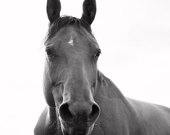 Horse Photograph with White Background, Black and White Horse Photography
