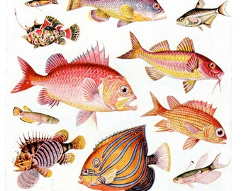 Colorful FISH print, 1950s chart of assorted fishes, tropical fish print