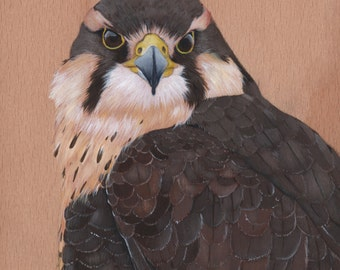 Falcon Original acrylic painting on cradled board, bird art, wall art, home decor, original bird painting