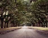 Old South - Original Fine Art Photograph - Rustic, Nature, Country, Landscape, FREE SHIPPING