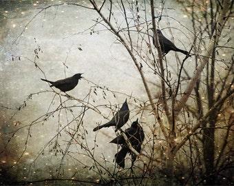 Unique Blackbird Wall Art, Fine Art Photography, Flock of Blackbirds, Black, Surreal, Enchanted, Large Wall Art