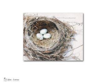 Bird's Nest Decor, Rustic Nature Photography, Canvas Wall Art, Farmhouse Chic Decor