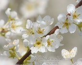 White Flower Photography, floral wall art, nature photography, cottage decor, spring blossoms, fine art print