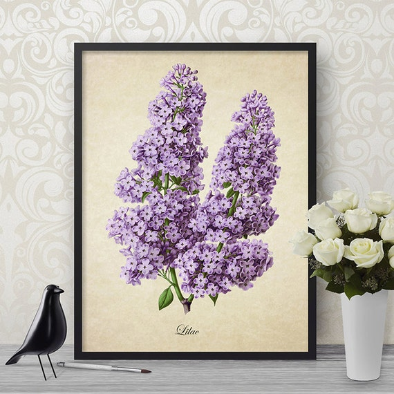 Antique Botanical Wall Art Print Purple Lilacs Giclee Vintage