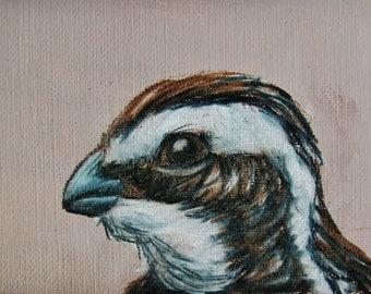 ACEO Bird Series #5--Northern Bobwhite