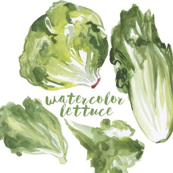 Watercolor Lettuce Lettuce Clip Art Salad Clipart Veggie