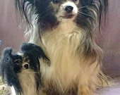 Papillon, felted pet portrait, with real doghair, natural facsimile, made to order, soft sculpture, pet portrait, animal replica