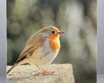 Robin Redbreast - Photo Card