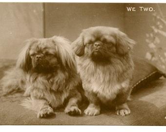 1927 Pekingese Dog Postcard Antique Vintage Victorian Edwardian Photo