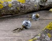 Real lavender earrings, Dried lavender seeds earrings, Nature earrings, Purple earrings, Real flowers earrings, Brass Glass vial earrings WJ