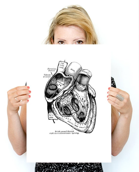 Human Heart Poster, anatomical art, Roses Wall art, Human anatomy, Human heart poster, gifts for doctor wall art, SKA039WA3