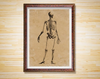 Anatomy print Vintage decor Medical Skeleton's back poster
