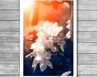 Blossom, Flowering, Spring Print, Springtime, Apple Tree, Blossoming Tree, Spring Photography, Bloom, Spring Tree, White Flowers, Art Photo