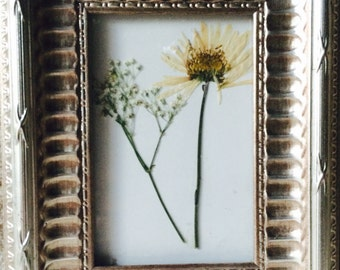 Pressed baby's breath and daisy