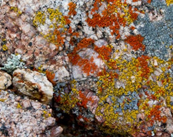 Panorama: Stone and lichen close up photograph. Printed on canvas.