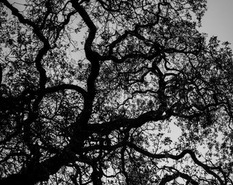 Black and White Tree - creepy dark photography