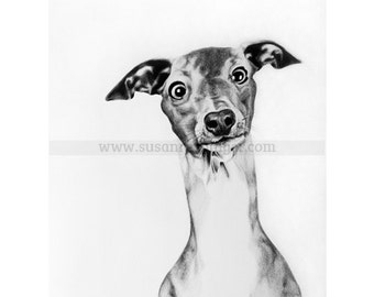 Dog, limited edition print of graphite on watercolour paper drawing