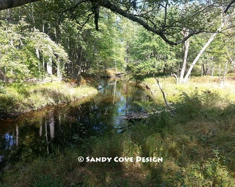 Willett Brook, Pondicherry Park, Bridgton, Maine, Woods, Stream, Fine Art, Wall Art