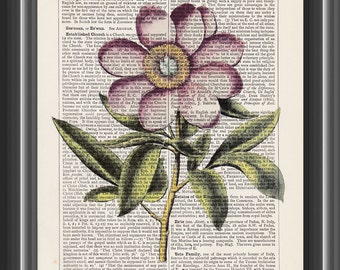 pink peony vintage Basilius Besler botanical art print on dictionary page home decor kitchen #129