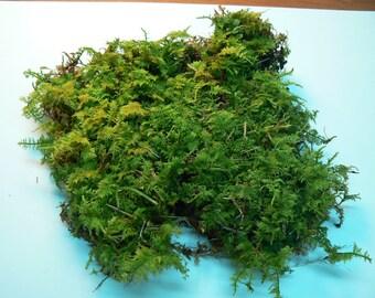 Fern moss life