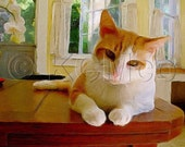 Cats Animals Photography Instant Digital Download Poster Print Decorative Wall Art Hone Devor