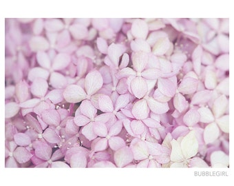 Nature Photography PRINT, Hydrangea in Pink, Wall Art